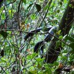 Morador encontra cobra gigante em pedreira no interior do RS