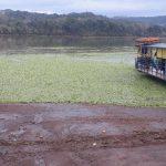 Fato intriga moradores e mobiliza polícia ambiental no rio Uruguai