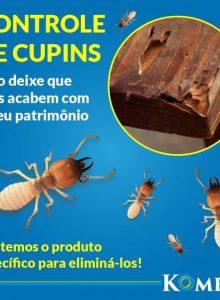 Como controlar infestação de cupim