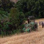 Homem morre ao tombar colheitadeira em lavoura de trigo