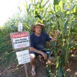 Agricultor coloca alerta em lavoura de milho verde para espantar ladrões