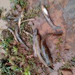 Vídeo – Moradores denunciam mortandade de peixes em riacho de Três Passos