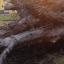 Ventos chegam até 97km/h e provocam estragos em regiões do Rio Grande do Sul